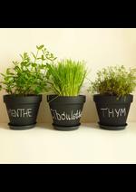 Promos et remises  : Les plants et les herbes aromatiques sont arrivés !!