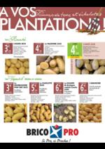 Prospectus Bricopro : A vos plantations : pommes de terre et échalottes